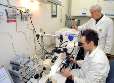 A bioszenzoros gázkromográf csápdetektora jelzi az illatanyagok biológiailag aktív komponeseit