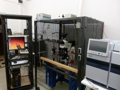 Gázkromatográffal kapcsolt egyedi érzékszőr idegi elvezetésére alkalmas műszer