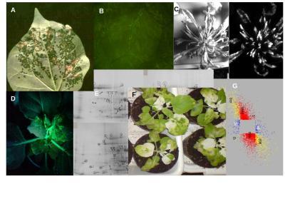 Növénybakteriológiai módszerek