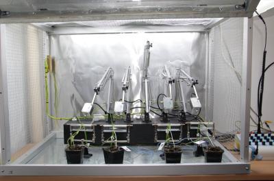 A szívókártevők táplálkozási folyamatait elektrofiziológiai módszerrel elektro-penetrográf készülék