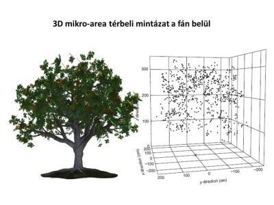 3D mikro-area térbeli mintázat egy gyümölcsfán belül